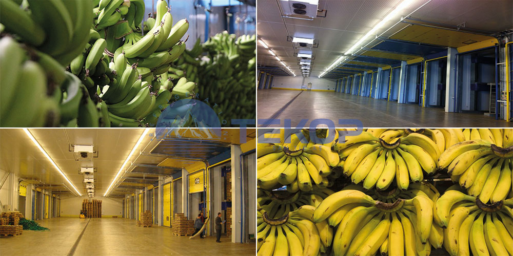 Fruit Ripening Rooms, Banana Ripening Rooms, Fruit Cold Rooms