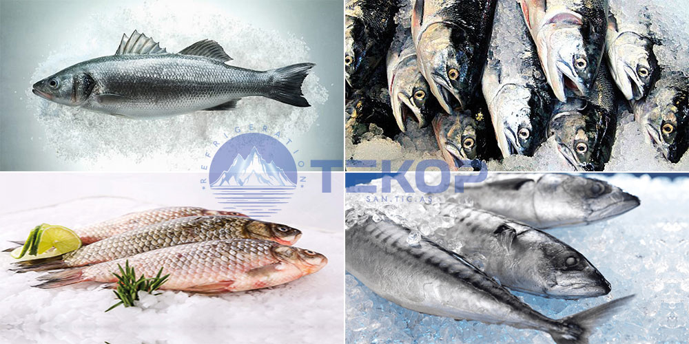 Fishery Cold Room, Fish Blast Freezing And Storage, Fish Cooling Systems